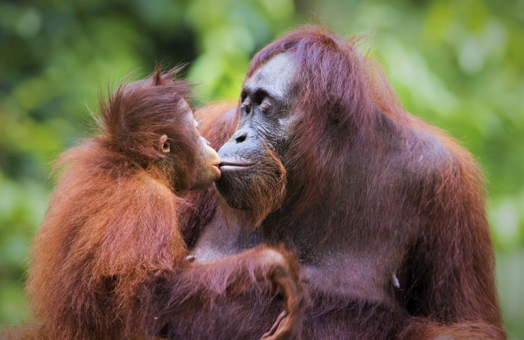Palm oil free organic skincare at Organic Magnesium Solutions